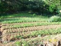 09/11/2016 - Marcelo Kohlrausch sugere a criação do Programa de Agricultura Urbana em Esteio